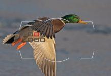 AF Senaryoları ve Düşük Işıkta Otofokus Performans İpuçları