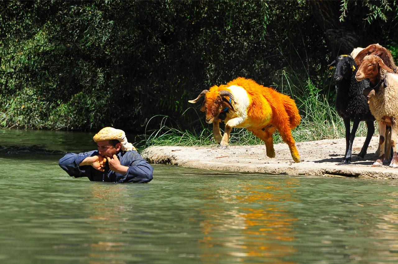 Koyun Atlatma Festivali