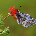 Anemon ve Kelebeğin Dansı